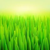 Трава макроса иллюстрации вектора запаса реалистическая Предпосылка лета и весны Стоковое фото RF