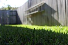 Трава макроса с мягкой предпосылкой загородки фокуса Стоковое Фото