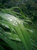 Трава макроса Стоковые Изображения