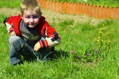 трава мальчика сидит Стоковое Изображение RF