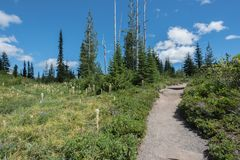 Трава медведя растет вдоль следа Mount Rainier Стоковые Изображения