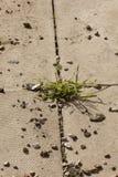 Трава между слябами патио Стоковые Фото