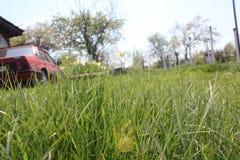 Трава Мир увиденный от перспективы насекомого Стоковая Фотография RF