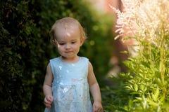 трава младенца перерастанное немногая Стоковые Фотографии RF