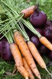 трава морковей бураков Стоковое Изображение RF