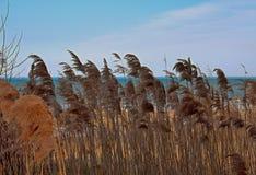Трава моря на пляже Стоковая Фотография