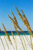 Трава моря Стоковое Фото