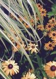 Трава над маргаритками стоковое фото