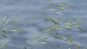Трава над рекой акции видеоматериалы