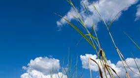 Трава начала стоковые фотографии rf