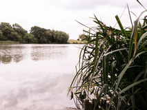 Трава на береге озера Стоковые Фото