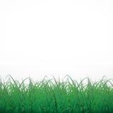 Трава на белой сияющей предпосылке Стоковое Изображение
