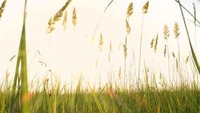 Трава на ветре видеоматериал