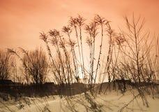 Трава на заходе солнца. Время зимы. Стоковые Изображения