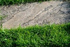 Трава на каменной предпосылке Стоковые Изображения RF
