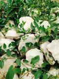 Трава над камнями Стоковая Фотография