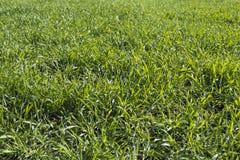 Трава на лужке Стоковое Изображение RF
