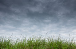 Трава на небе дождя Стоковое Фото