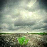Трава на дороге Стоковые Изображения RF