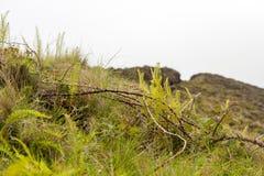 Трава на предпосылке тумана стоковое фото