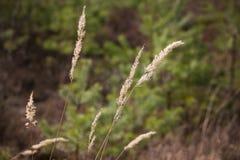 Трава на предпосылке запачканной зеленым цветом стоковая фотография rf