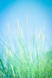 Трава на пляже, конец вверх по предпосылке Стоковое Изображение RF