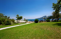 Трава на пляже Стоковое фото RF
