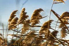 Трава на свежий день стоковая фотография rf