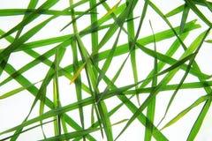 Трава на светлой коробке стоковые изображения