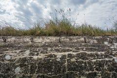 Трава на старом бункере Интересная атмосфера Военные Стоковые Фотографии RF