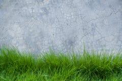 Трава на стене цемента Стоковая Фотография