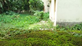 Трава на стене стоковая фотография rf