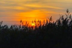 Трава на стороне озера Стоковые Изображения RF