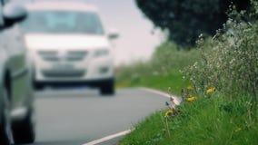 Трава на стороне дороги с проходить автомобили акции видеоматериалы