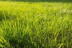 Трава на лужайке загоренной по солнцу Стоковое Изображение