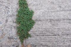 Трава на цементе Стоковые Фото