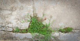 Трава на цементе Стоковое Фото