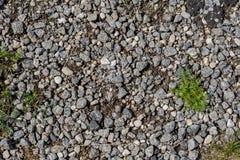 Трава на bacground пола камня Дзэн стоковые изображения