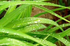 трава ненастная Стоковые Фотографии RF