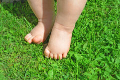 трава ног младенца Стоковое Фото