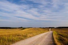 трава облаков стоковые фото