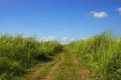 трава облаков Стоковое Изображение