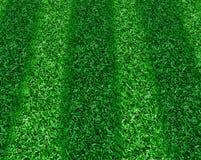 трава обнажала Стоковые Изображения RF