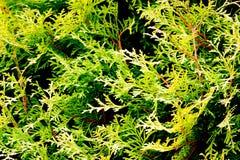 трава одичалая Стоковая Фотография