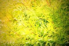 трава одичалая Стоковая Фотография RF