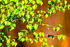 трава одичалая Стоковые Изображения RF
