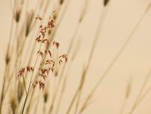 трава одичалая Стоковое Изображение