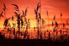 трава одичалая стоковые изображения