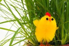 трава одно пасхи цыпленка стоковое изображение rf