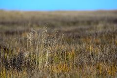 Трава озера Цинха стоковое фото rf